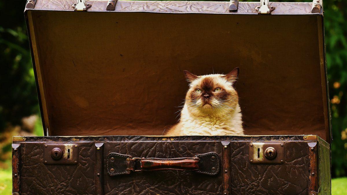 valigia con gatto